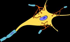 Fasten Multiple Sklerose