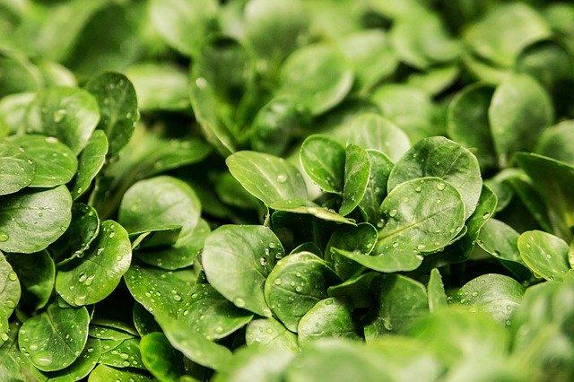 grünes Blattgemüse ist reich an Vitamin K